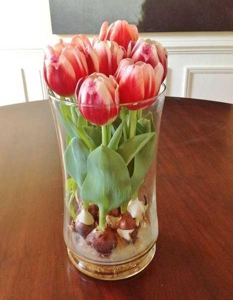 Tulip Blooms in Water