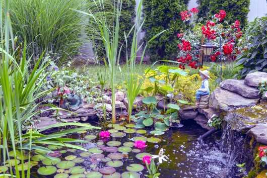Aquatic Water Garden
